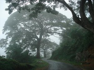 Misty Hills of Sri Lanka